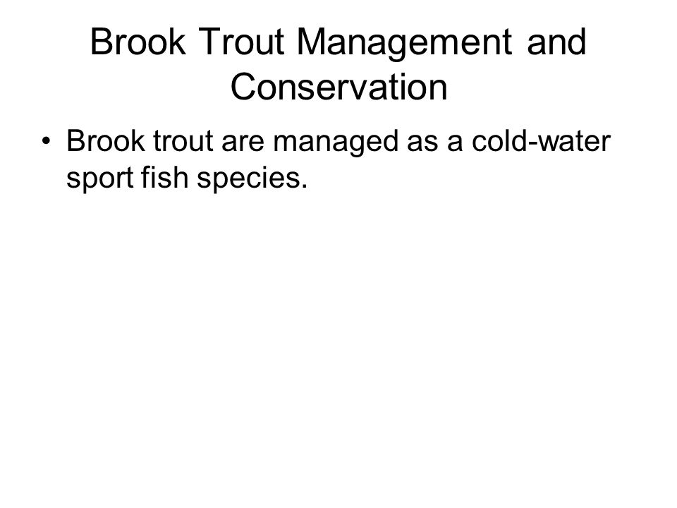 Brook Trout Management and Conservation