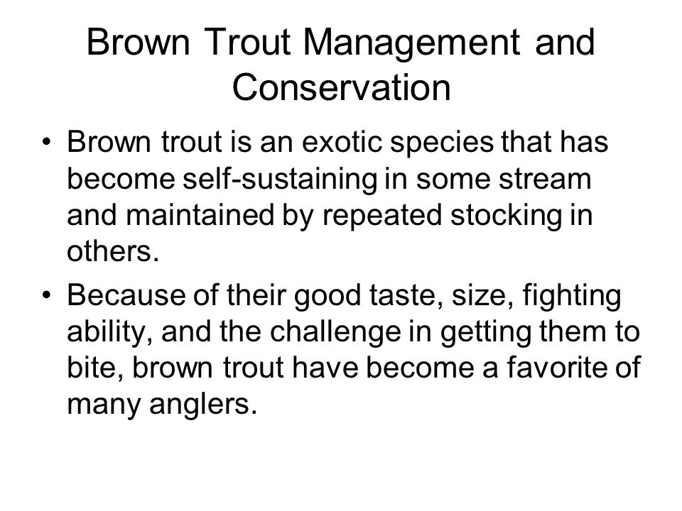 Brown Trout Management and Conservation