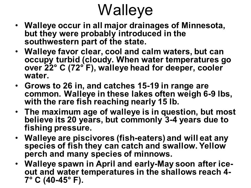 Walleye Walleye occur in all major drainages of Minnesota, but they were probably introduced in the southwestern part of the state.