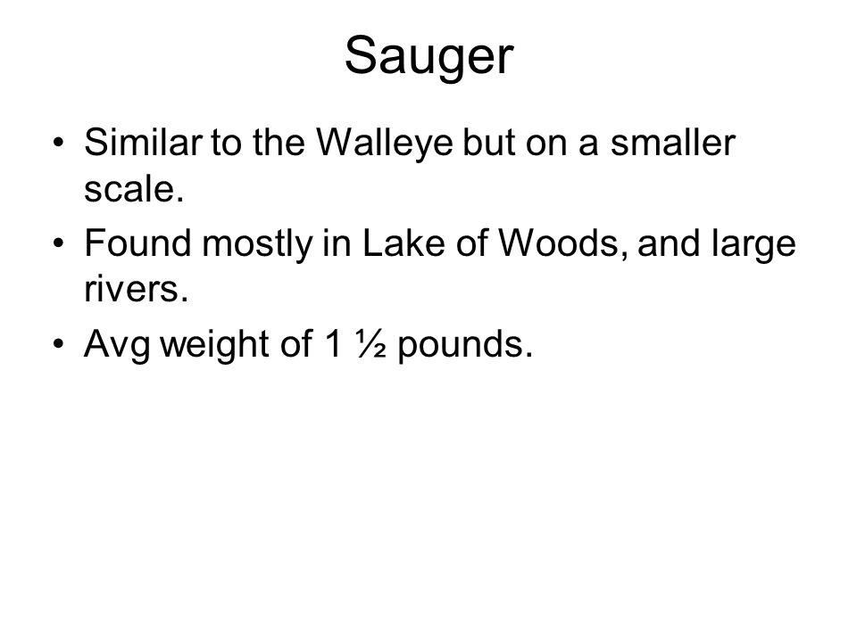 Sauger Similar to the Walleye but on a smaller scale.