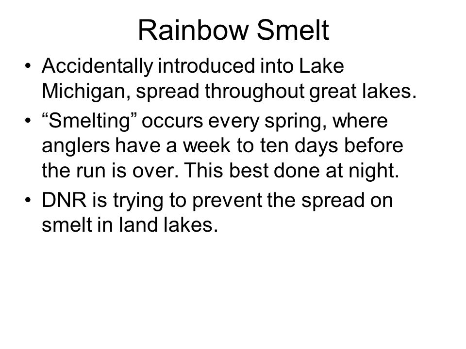Rainbow Smelt Accidentally introduced into Lake Michigan, spread throughout great lakes.