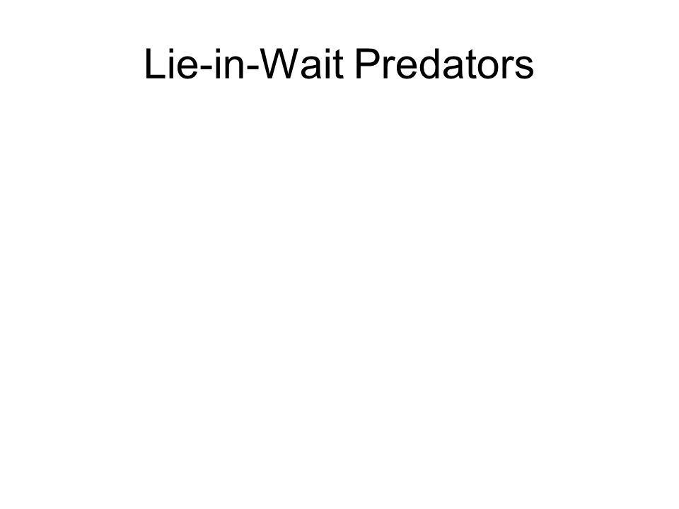 Lie-in-Wait Predators