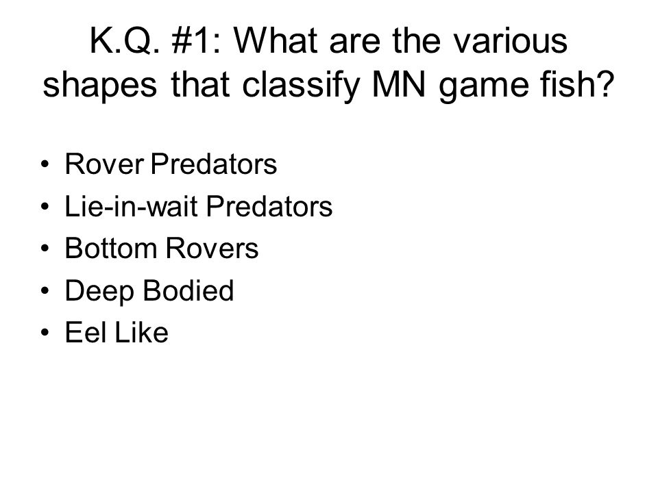 K.Q. #1: What are the various shapes that classify MN game fish
