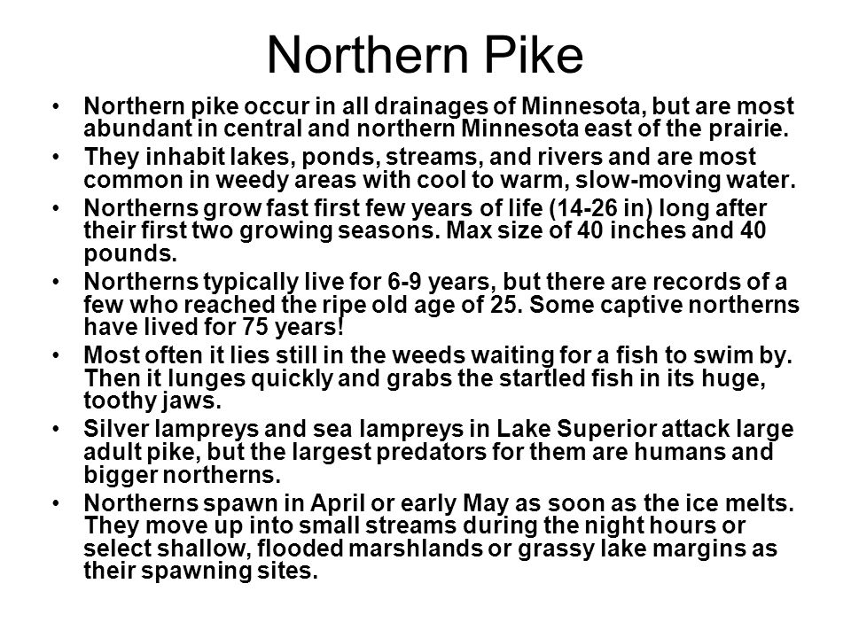 Northern Pike Northern pike occur in all drainages of Minnesota, but are most abundant in central and northern Minnesota east of the prairie.