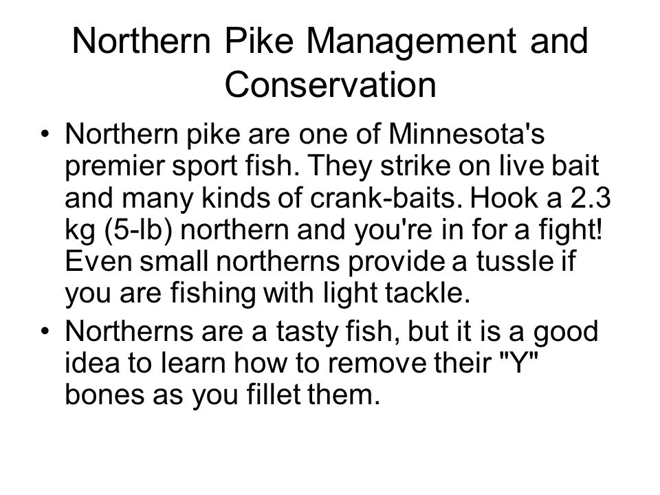Northern Pike Management and Conservation