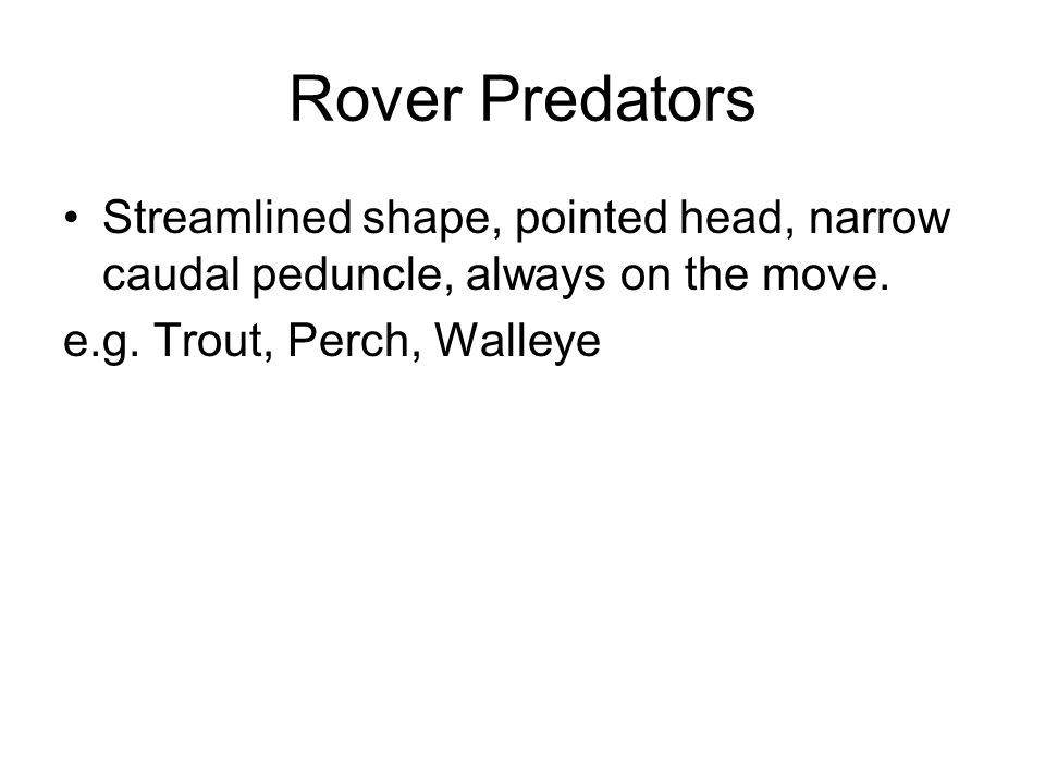Rover Predators Streamlined shape, pointed head, narrow caudal peduncle, always on the move.