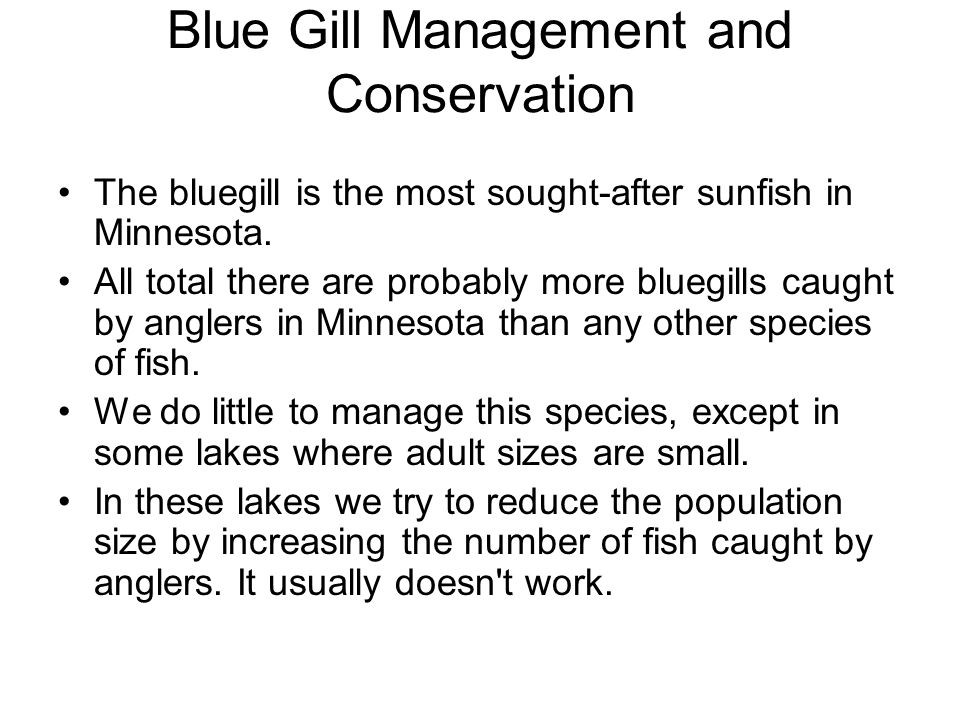 Blue Gill Management and Conservation