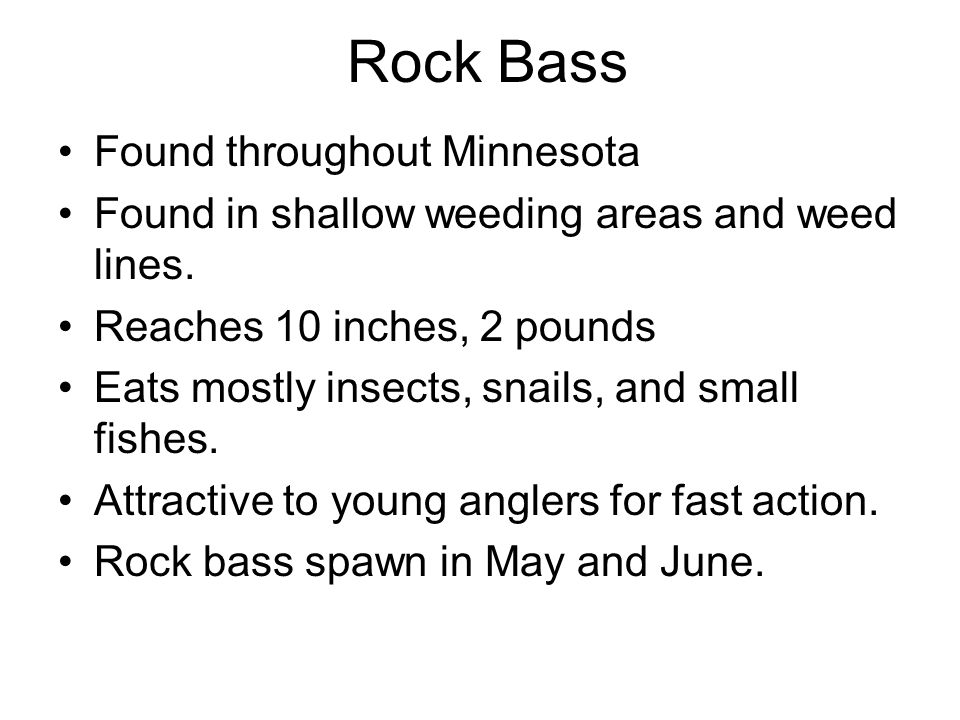 Rock Bass Found throughout Minnesota
