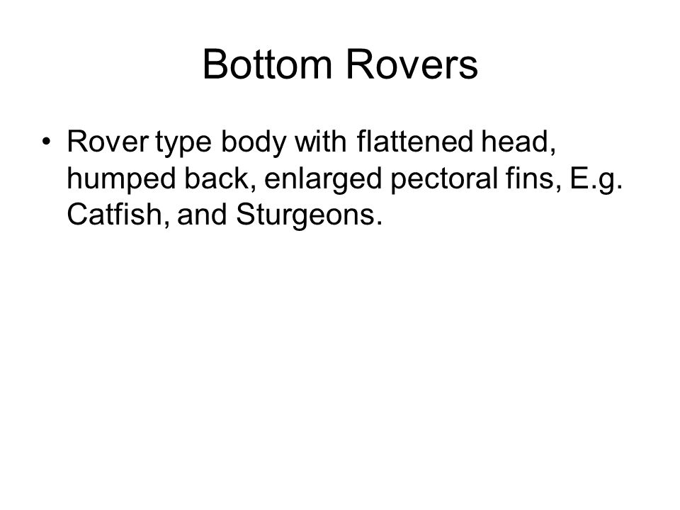 Bottom Rovers Rover type body with flattened head, humped back, enlarged pectoral fins, E.g.