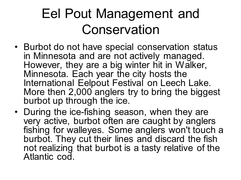 Eel Pout Management and Conservation