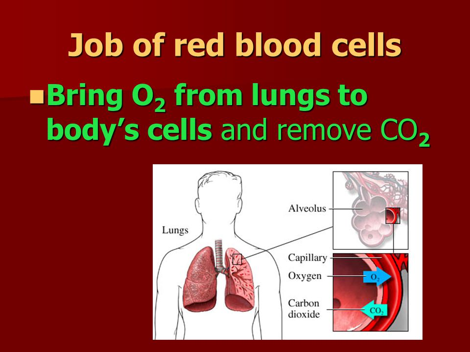 Job of red blood cells Bring O2 from lungs to body's cells and remove CO2