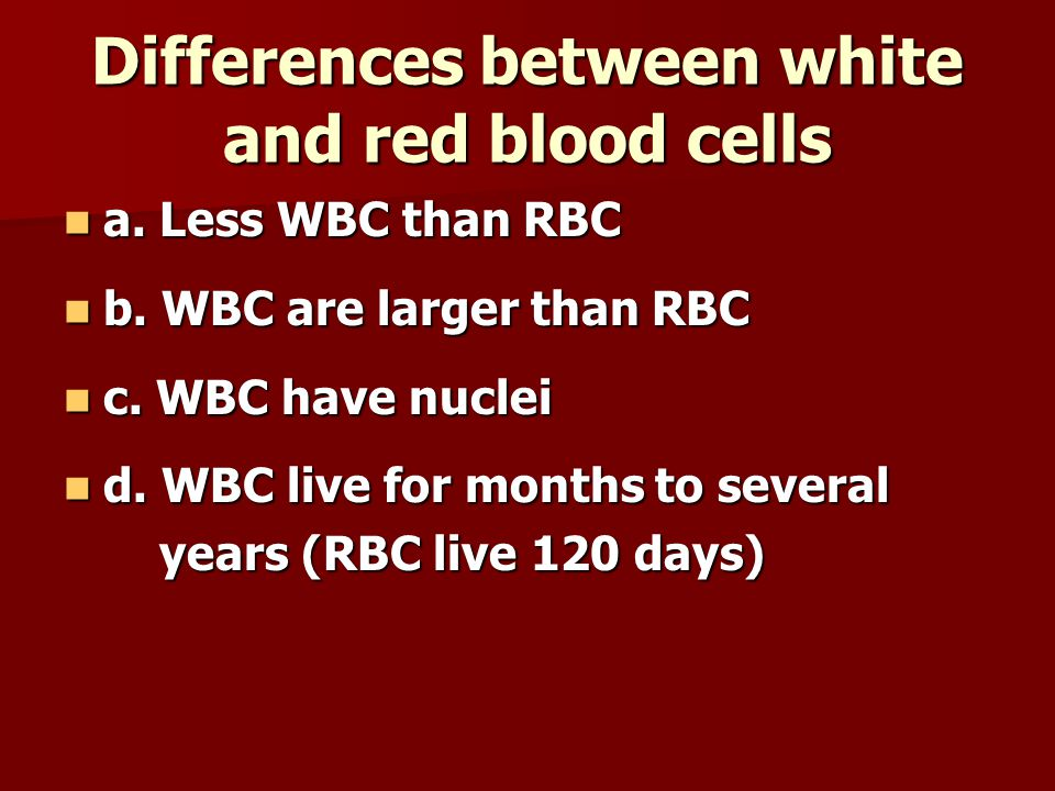Differences between white and red blood cells