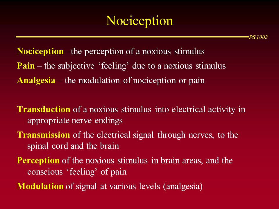 Nociception Nociception –the perception of a noxious stimulus