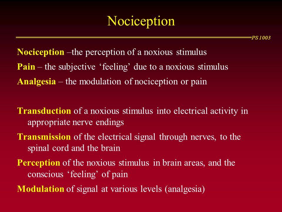 Nociception Nociception –the perception of a noxious stimulus