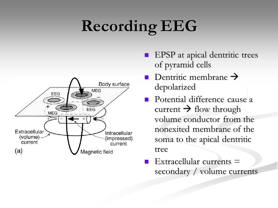 Recording EEG EPSP at apical dentritic trees of pyramid cells