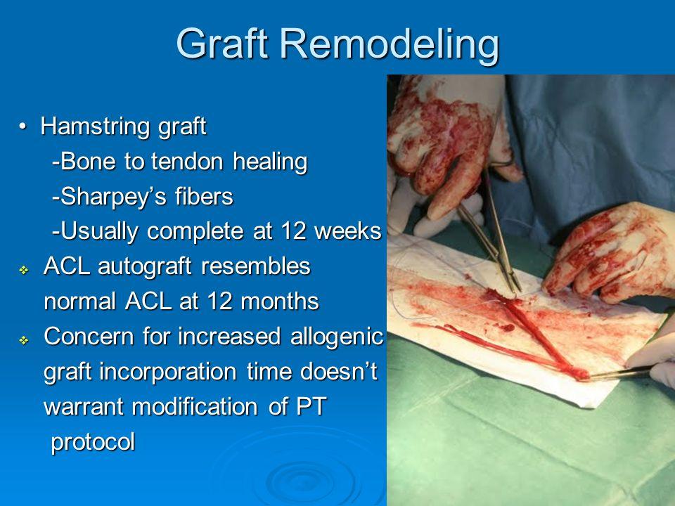 Graft Remodeling • Hamstring graft -Bone to tendon healing