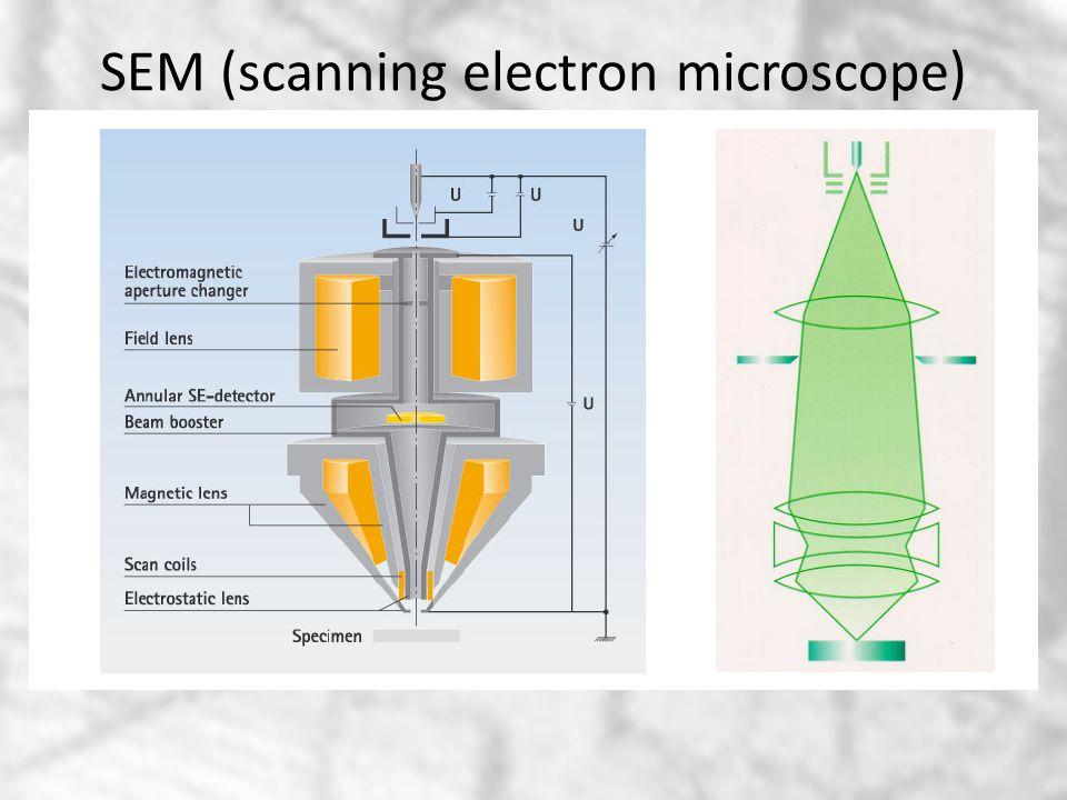 SEM (scanning electron microscope)