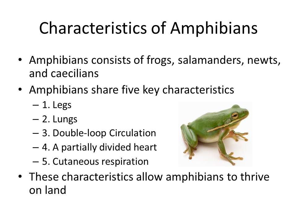Introduction to the Amphibian Body - ppt download