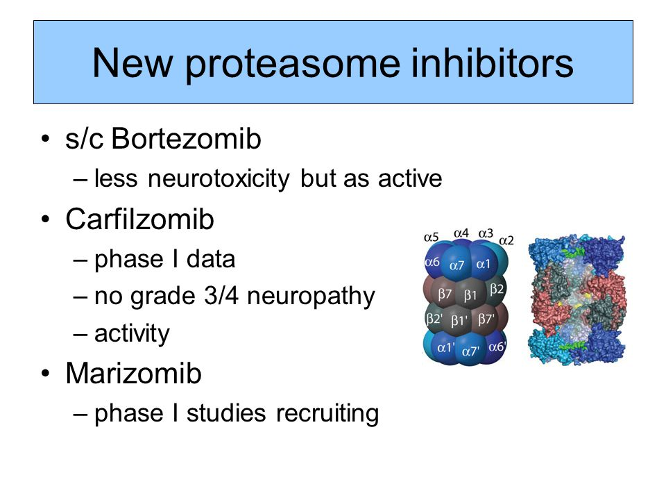 New proteasome inhibitors