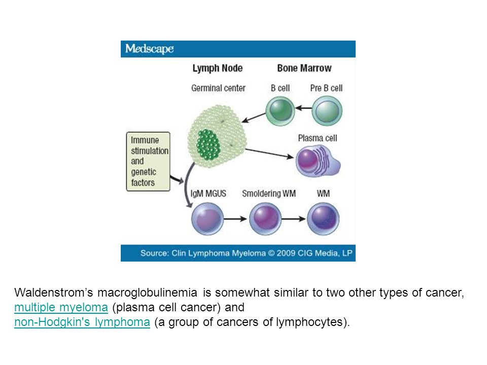 Waldenstrom's macroglobulinemia is somewhat similar to two other types of cancer,