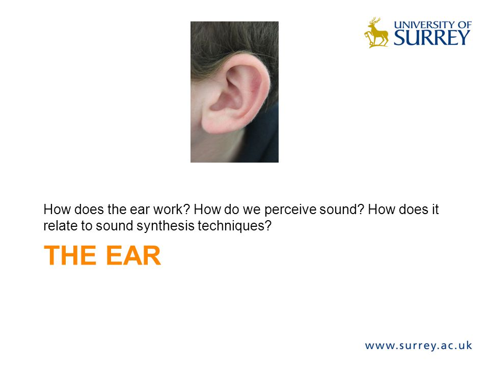 How does the ear work. How do we perceive sound