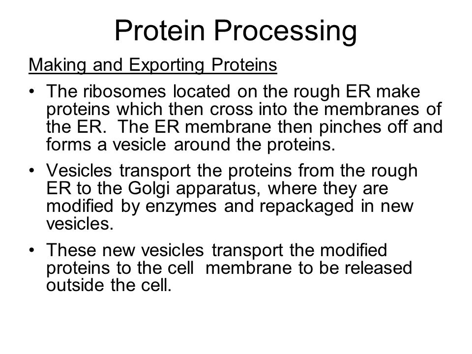 Protein Processing Making and Exporting Proteins