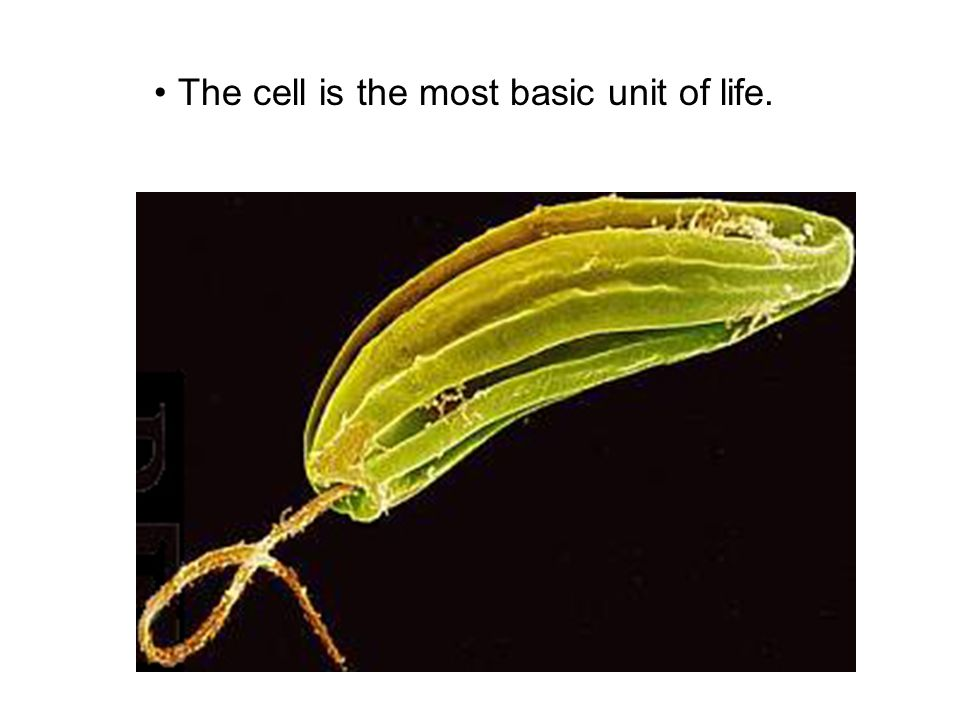 The cell is the most basic unit of life.