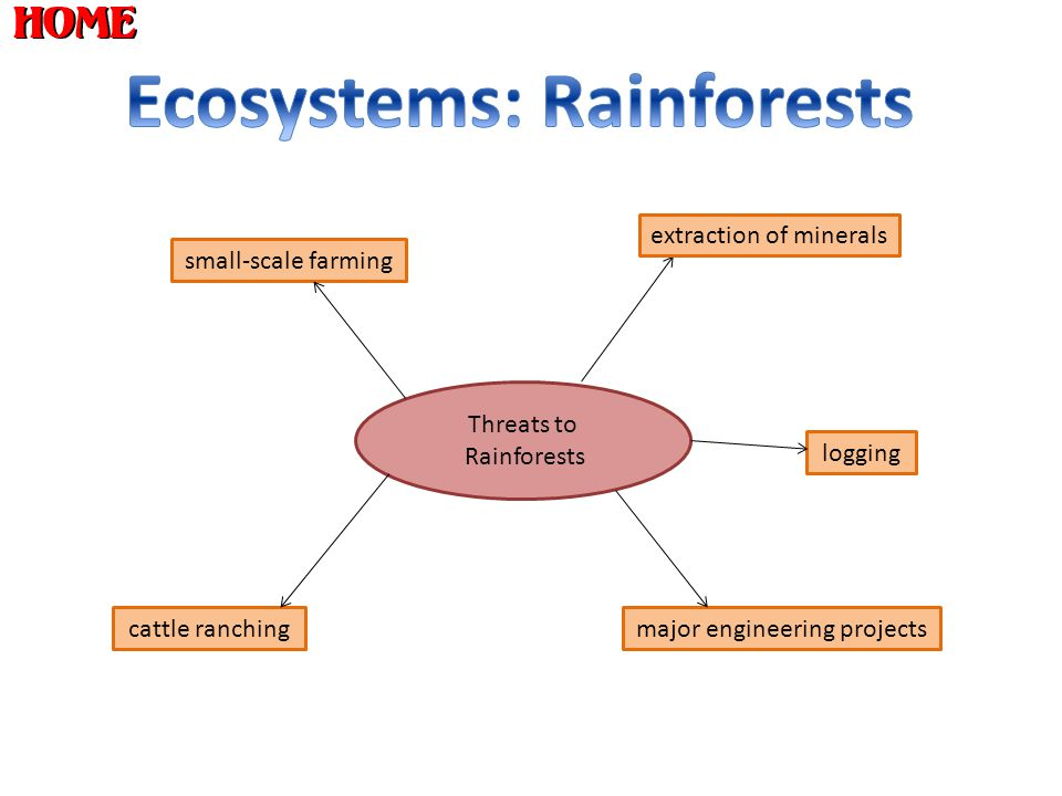 Ecosystems: Rainforests