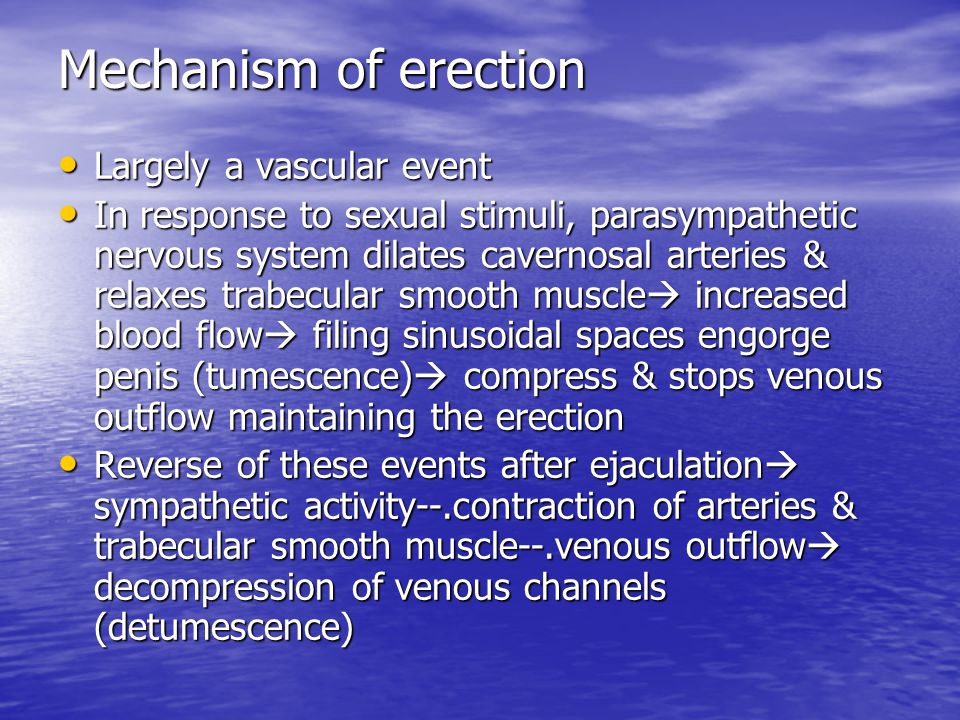 Mechanism of erection Largely a vascular event