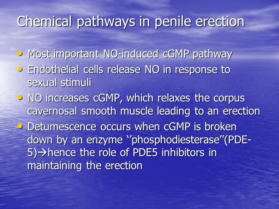 Chemical pathways in penile erection