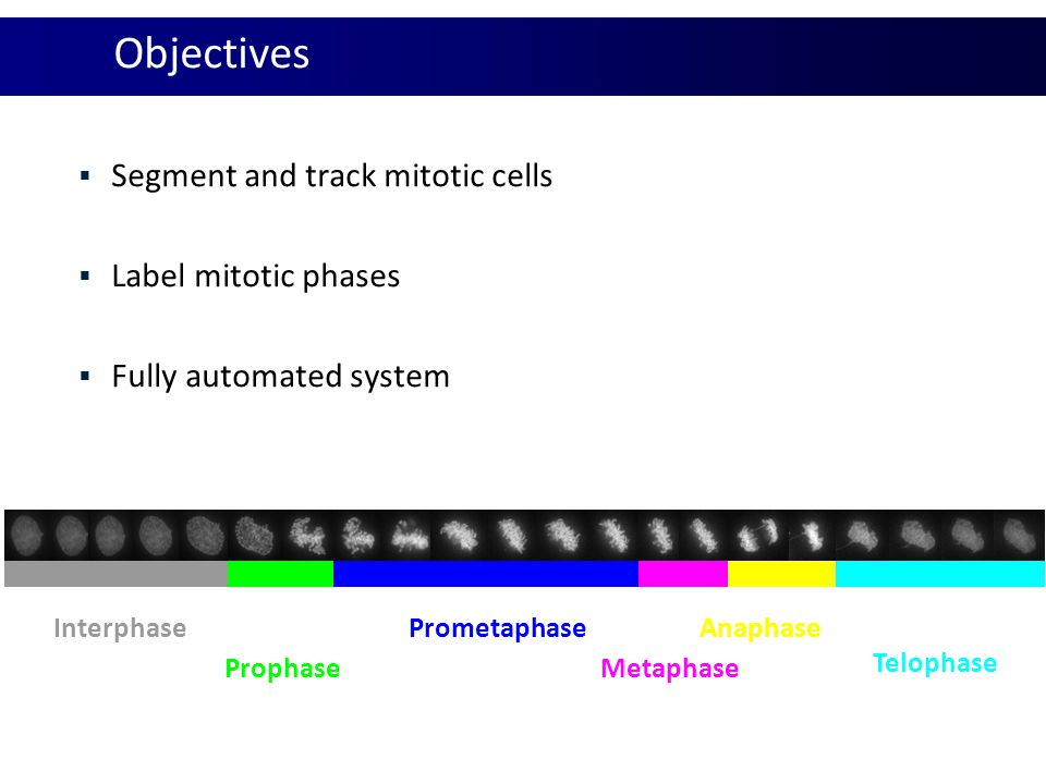 Objectives Segment and track mitotic cells Label mitotic phases