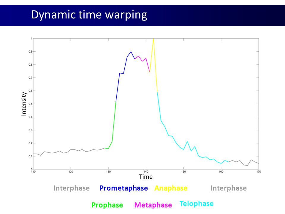 Dynamic time warping Interphase Prometaphase Anaphase Interphase