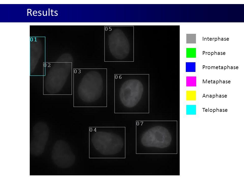 Results Interphase Prophase Prometaphase Metaphase Anaphase Telophase