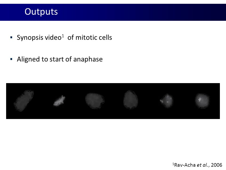 Outputs Synopsis video1 of mitotic cells Aligned to start of anaphase