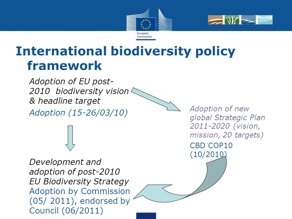 International biodiversity policy framework