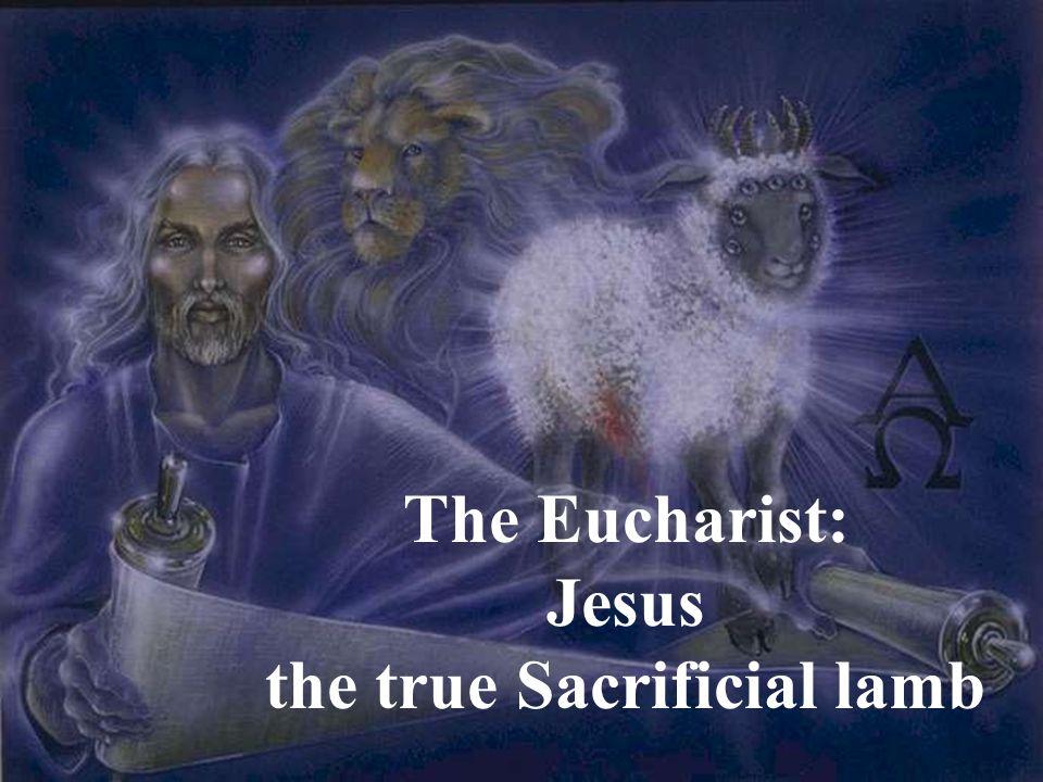 the true Sacrificial lamb