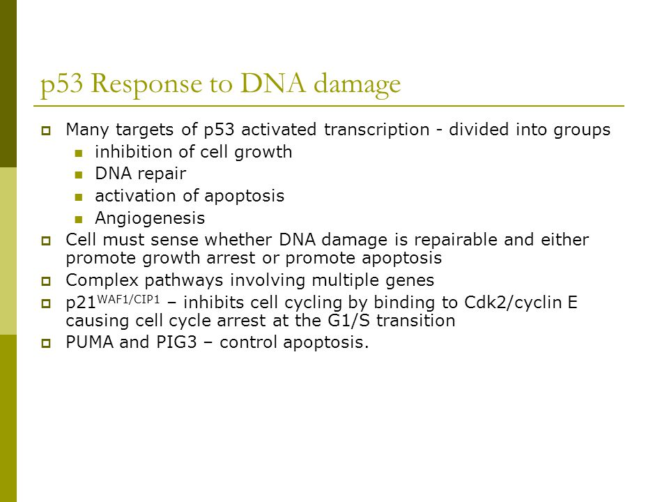 p53 Response to DNA damage