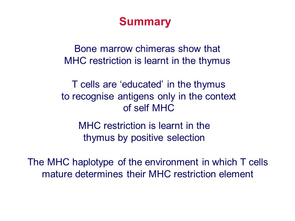 Summary Bone marrow chimeras show that