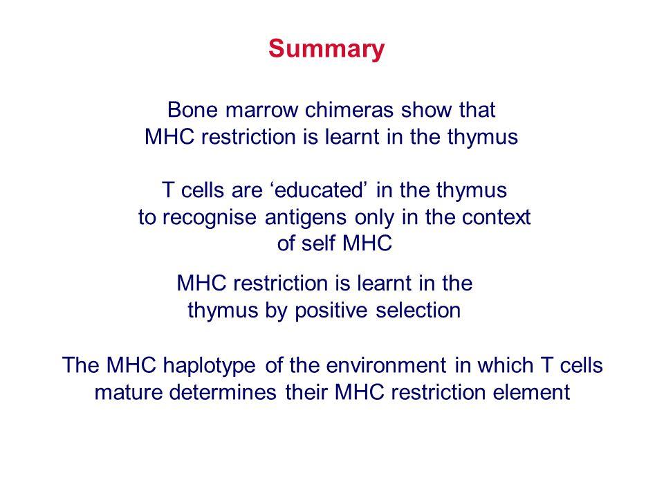 Summary Bone marrow chimeras show that