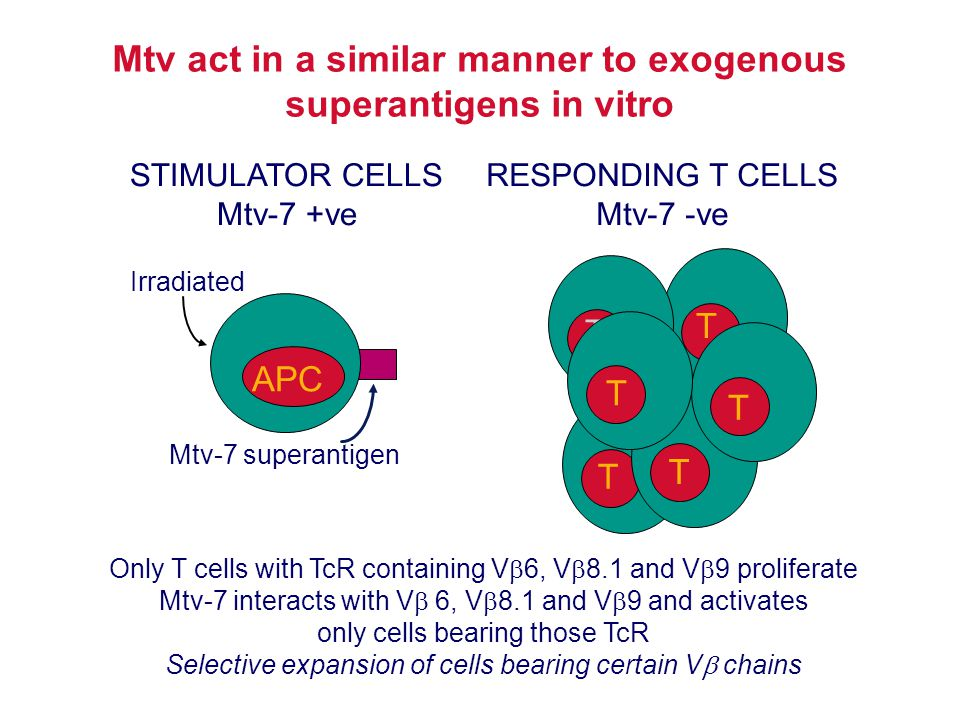 Mtv act in a similar manner to exogenous superantigens in vitro