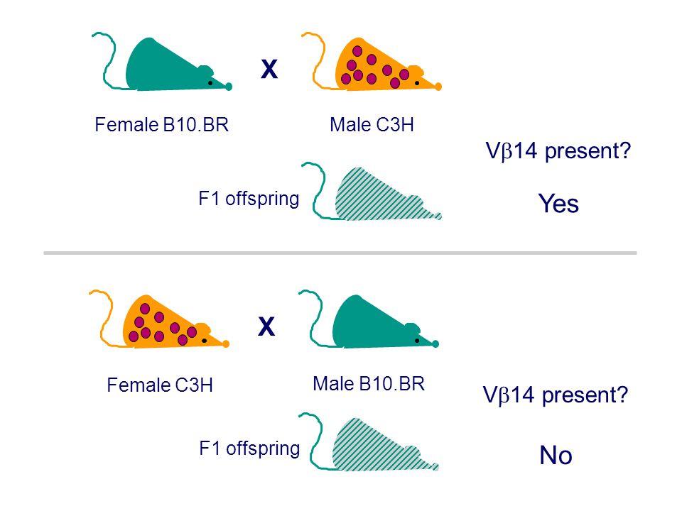 X Yes X No V14 present V14 present Male C3H Female B10.BR