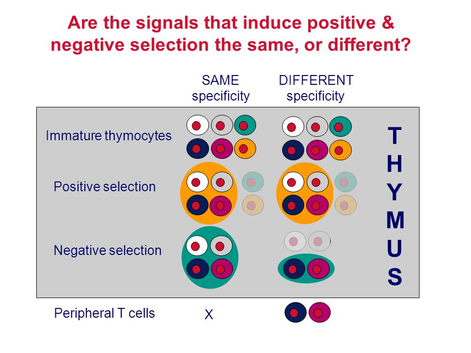 Are the signals that induce positive & negative selection the same, or different