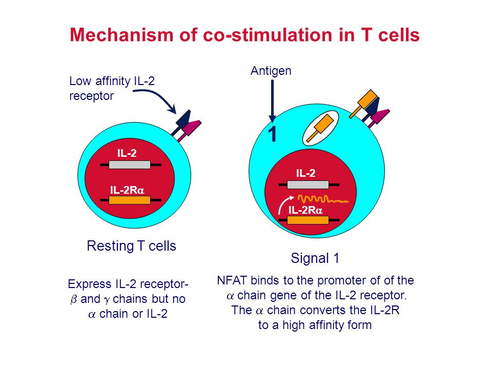 Mechanism of co-stimulation in T cells