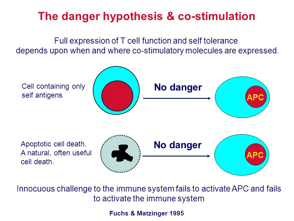 The danger hypothesis & co-stimulation