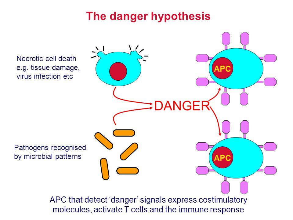 DANGER The danger hypothesis APC