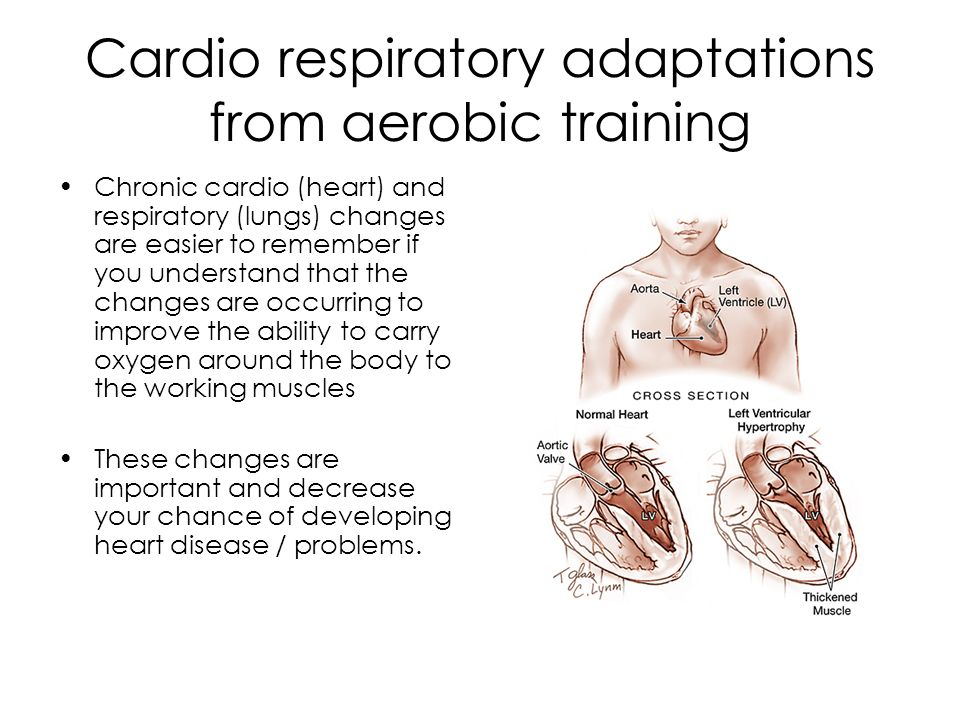 Cardio respiratory adaptations from aerobic training