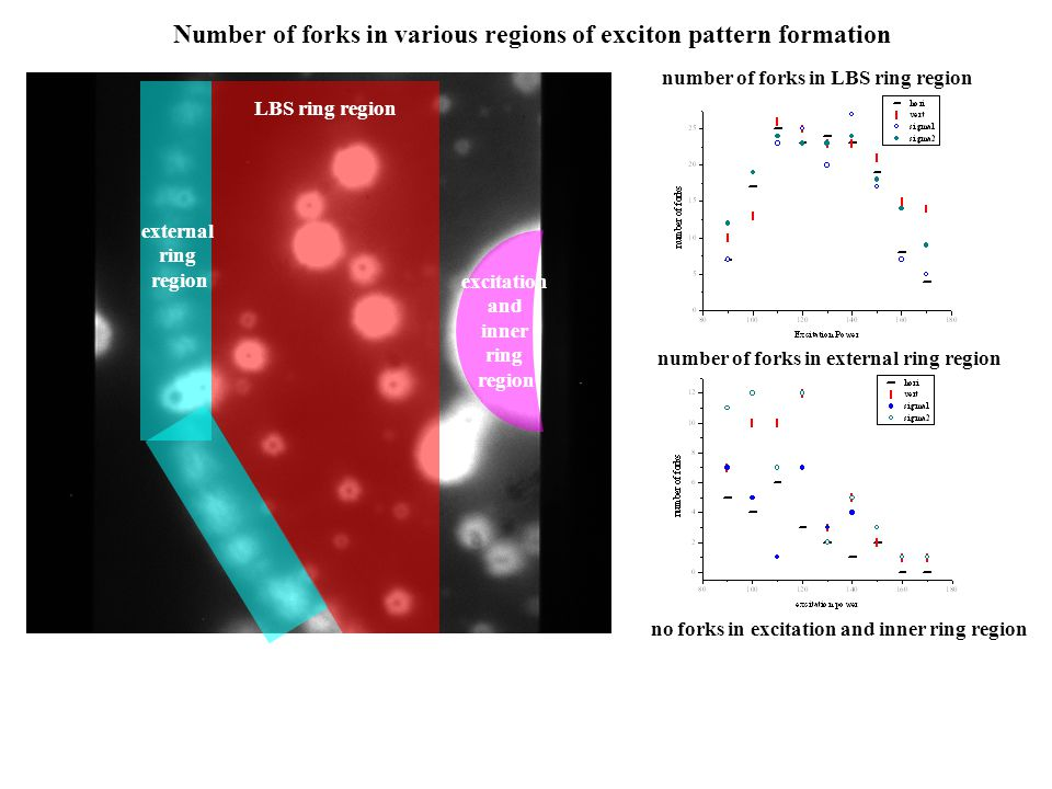 Number of forks in various regions of exciton pattern formation