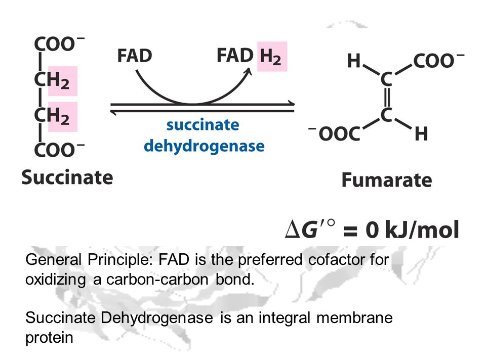 General Principle: FAD is the preferred cofactor for oxidizing a carbon-carbon bond.