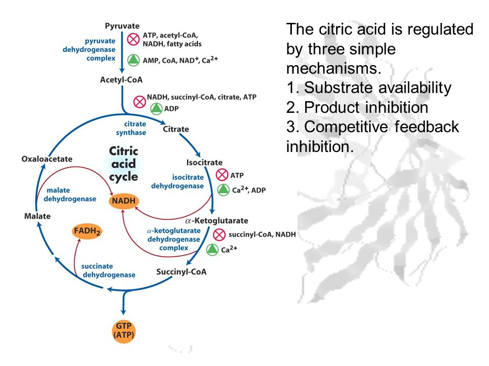 The citric acid is regulated by three simple mechanisms.