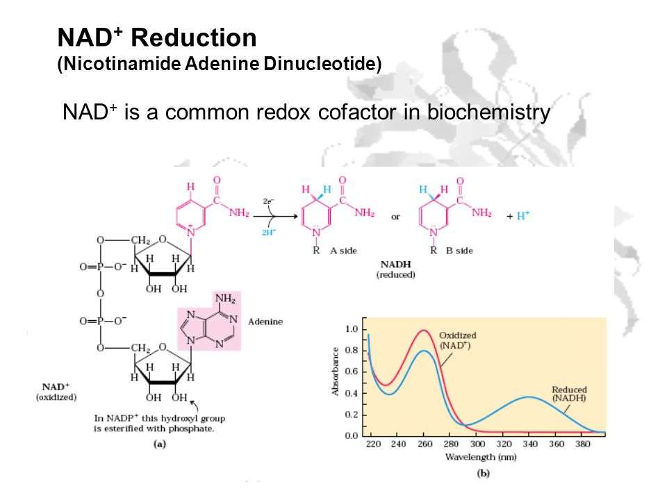 NAD+ Reduction (Nicotinamide Adenine Dinucleotide)